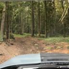 Offroad im Wald