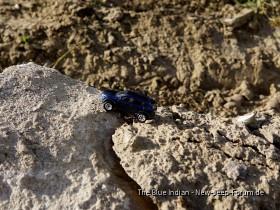 Kleiner blauer Indianer auf dem Rubiconchen Trail-1.jpg