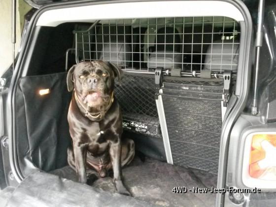 Renegade Kofferraum groß genug für großen Hund