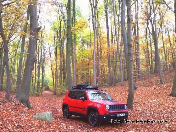 Herbststimmung 1 - Farbenspiel mit Renegade