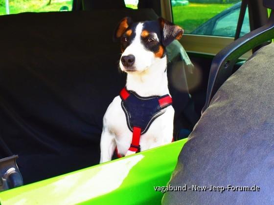 Jeep & Dog